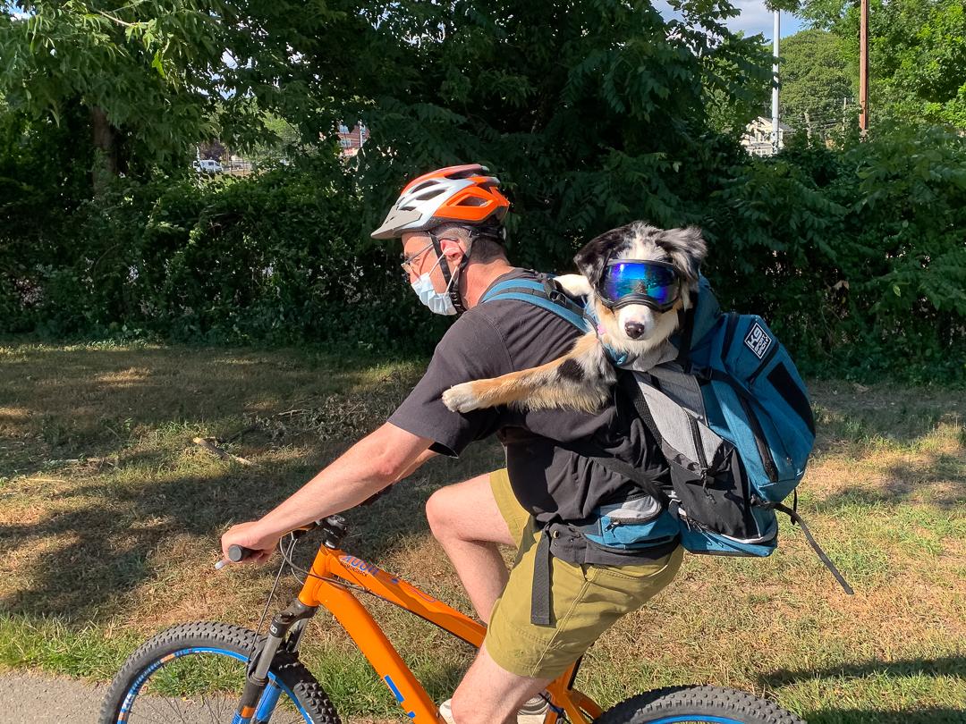 Minuteman Bikeway, Arlington, MA, August 2020.